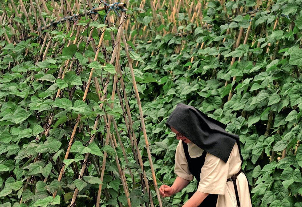 Les moniales vertes de Rieunette